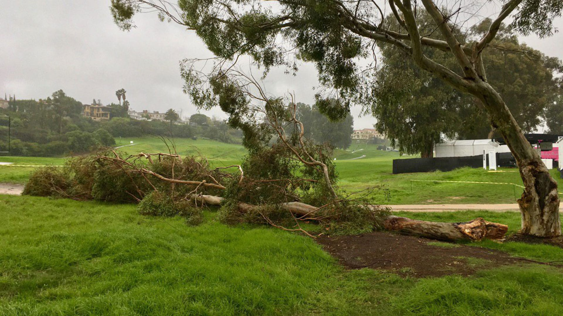 Photos Wind Takes Down Tree At Riviera Golf Channel