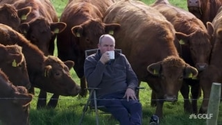 Moo-ving day: Unusual gallery at Irish Open