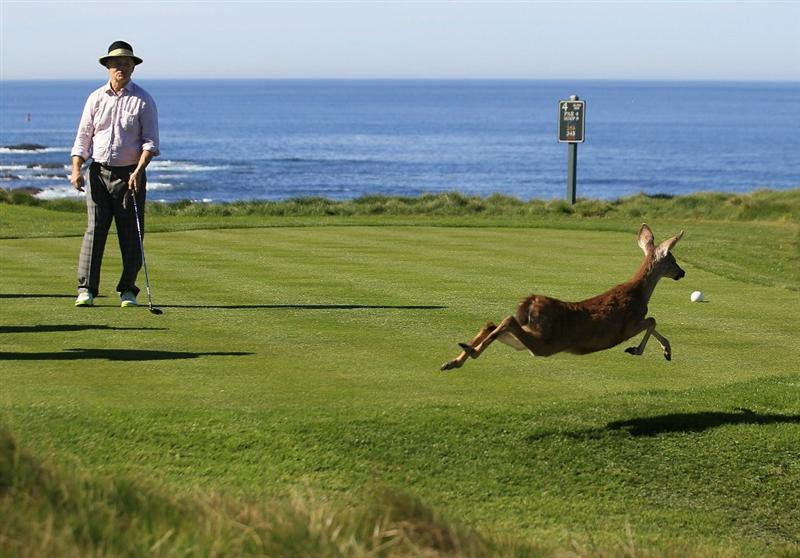 PEBBLE BEACH, CA - FEBRUARY 11:  Actor Bill Murray watches a deer cross the tee box on the 3rd hole at the AT&T Pebble Beach National Pro-Am- Round Two at the Spyglass golf club on February 11, 2011 in Pebble Beach, California. (Photo by Jed Jacobsohn/Getty Images)