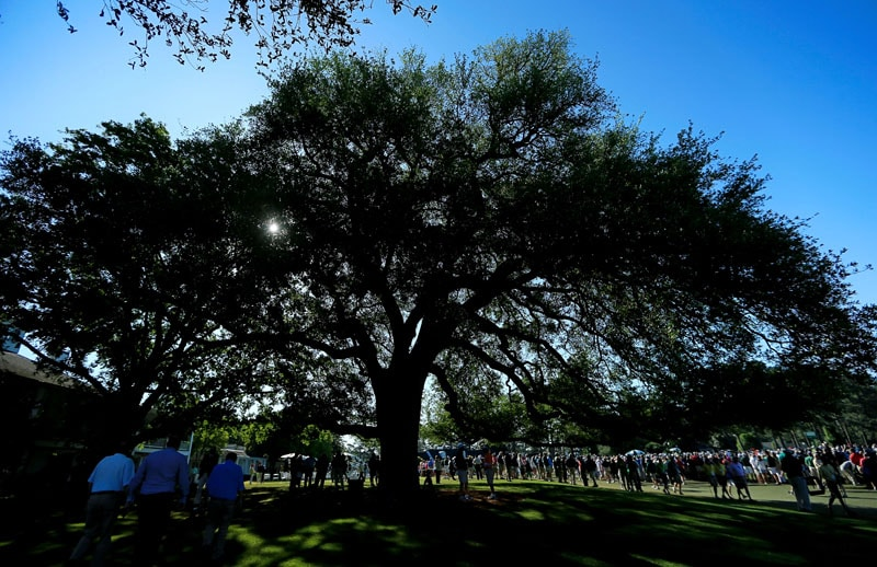 Oak tree behind Augusta National clubhouse