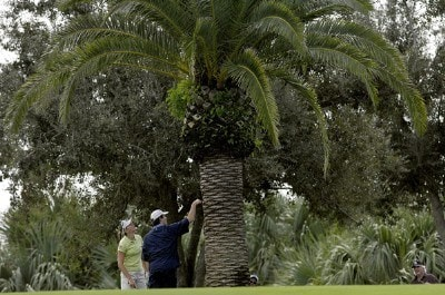 Brittany Lang and an official try to find her ball which she hit up into a tree during the second round of the ADT Championship at the Trump International Golf Club in West Palm Beach, Florida on Friday, November 17, 2006. LPGA - 2006 ADT Championship - Second Round