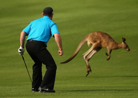 COOLUM BEACH, AUSTRALIA - DECEMBER 06:  Rory Sabbatini of South Africa scares a kangaroo off the 12th fairway prior to playing his stroke during the first round of the Australian PGA Championship at the Hyatt Regency Resort on December 6, 2007 in Coolum Beach, Australia.  (Photo by Cameron Spencer/Getty Images)