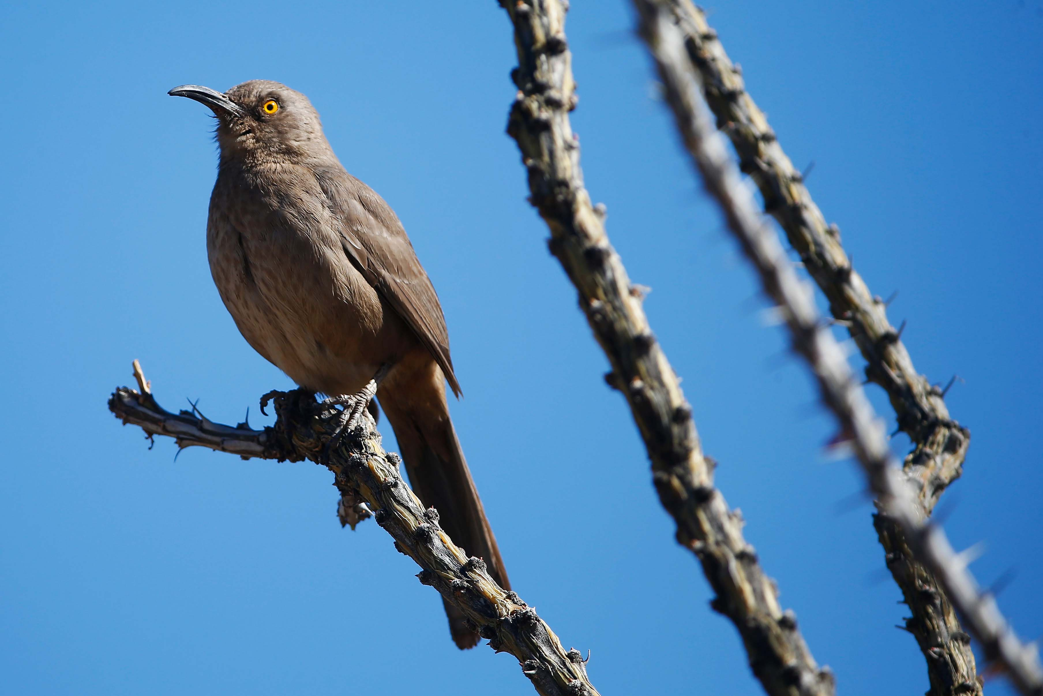 Watch the birdie