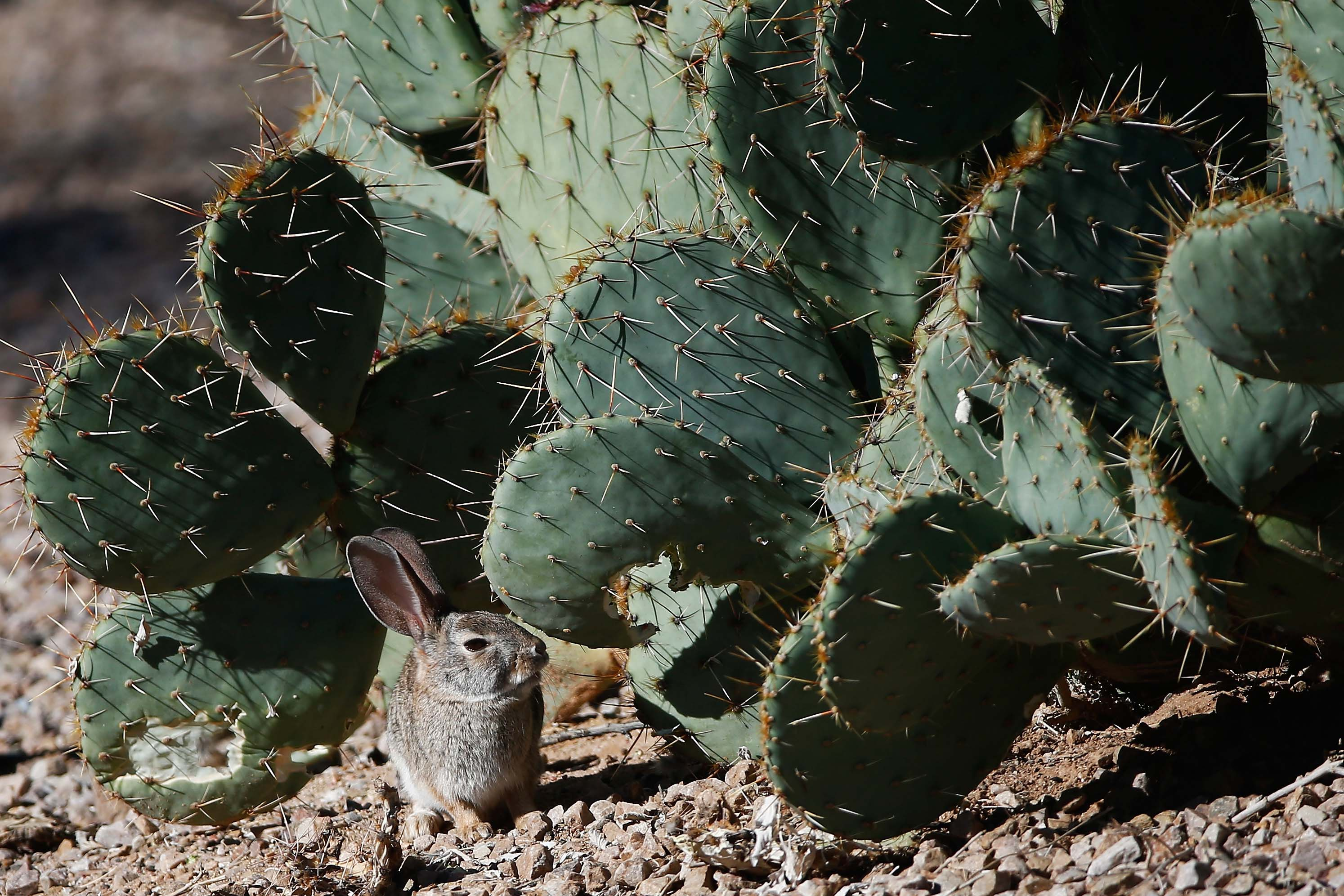 A prickly situation