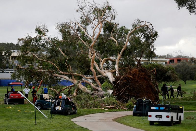 Downed trees at Torrey Pines