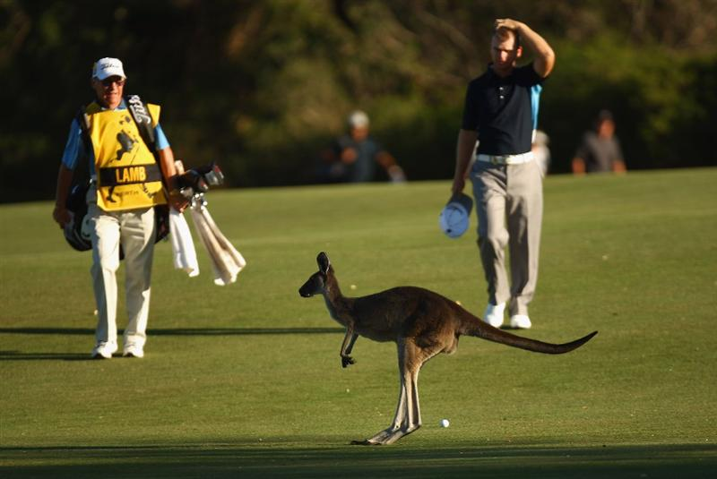 PERTH, AUSTRALIA - FEBRUARY 20:  A kangaroo is seen during round two of the 2009 Johnnie Walker Classic at The Vines Resort and Country Club on February 20, 2009 in Perth, Australia.  (Photo by Ian Walton/Getty Images)