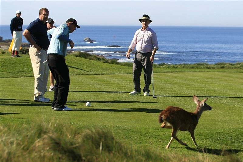 PEBBLE BEACH, CA - FEBRUARY 11:  (R-L) Actor Bill Murray, Duffy Waldorf and Harris Barton watch a deer cross the tee box on the 3rd hole at the AT&T Pebble Beach National Pro-Am- Round Two at the Spyglass golf club on February 11, 2011 in Pebble Beach, California.  (Photo by Jed Jacobsohn/Getty Images)