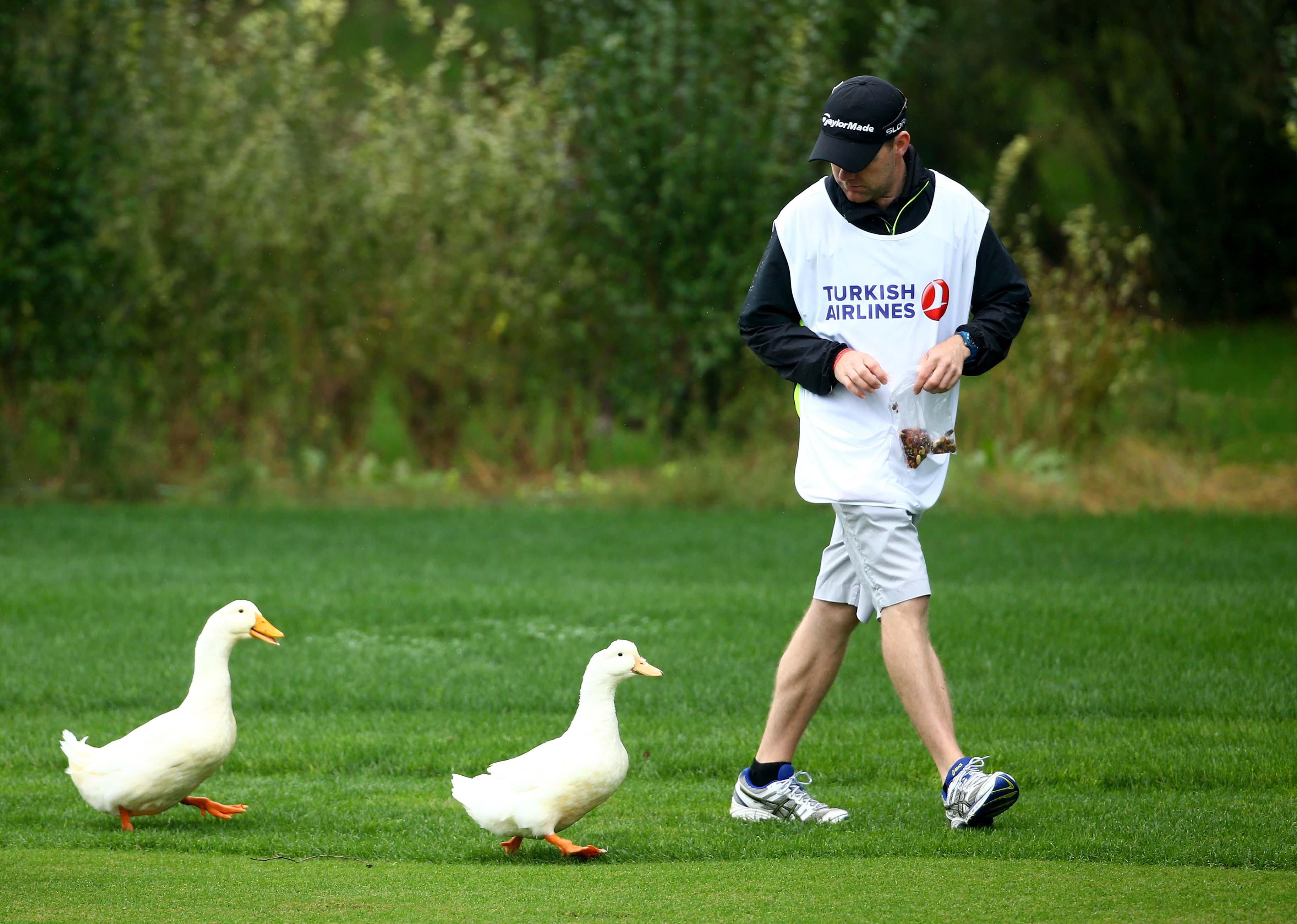 Duck ...
