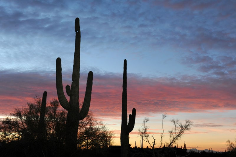Cactus at Dove Mountain