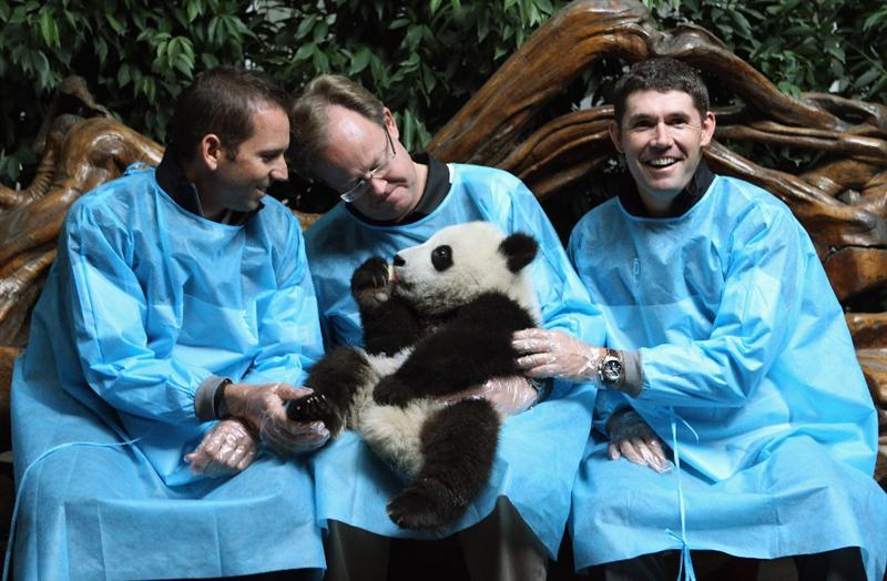 CHENGDU, CHINA - APRIL 19:  (L-R) Sergio Garcia of Spain, President of Volvo Event Management Per Ericsson and Padraig Harrington of Ireland pose for photos with a baby Panda during a visit to the Chengdu Research Base of Giant Panda Breeding on April 19, 2011 in Chengdu, China.  (Photo by Ian Walton/Getty Images)