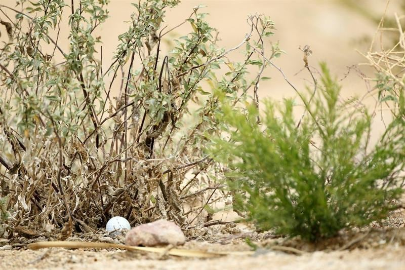 MARANA, AZ - FEBRUARY 26: Luke Donald of England's golf ball is seen in the rough on the second hole during the semifinal round of the Accenture Match Play Championship at the Ritz-Carlton Golf Club on February 26, 2011 in Marana, Arizona.  (Photo by Andy Lyons/Getty Images)