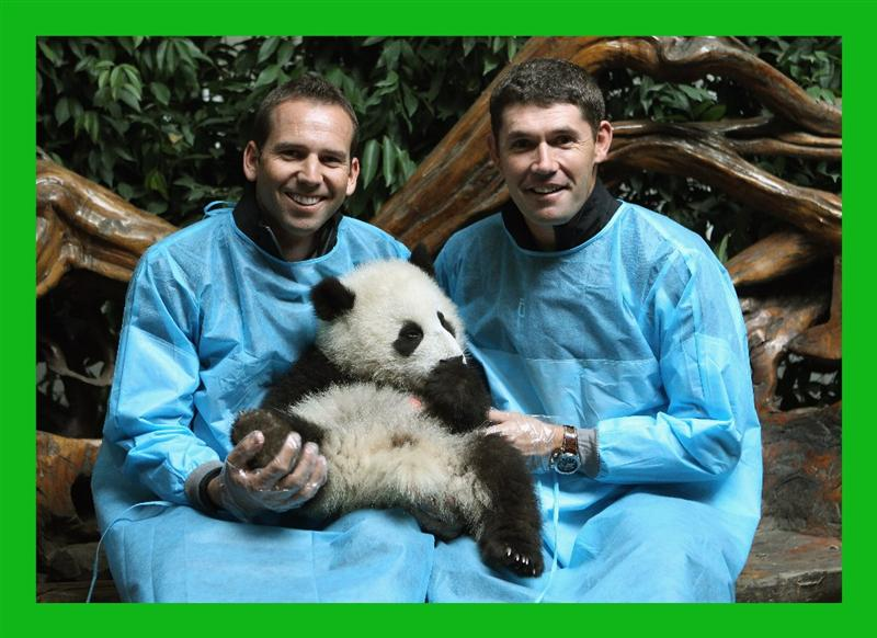 CHENGDU, CHINA - APRIL 19:  (L-R) Sergio Garcia of Spain and Padraig Harrington of Ireland pose for photos with a baby Panda during a visit to the Chengdu Research Base of Giant Panda Breeding on April 19, 2011 in Chengdu, China.  (Photo by Ian Walton/Getty Images) ***BESTPIX***