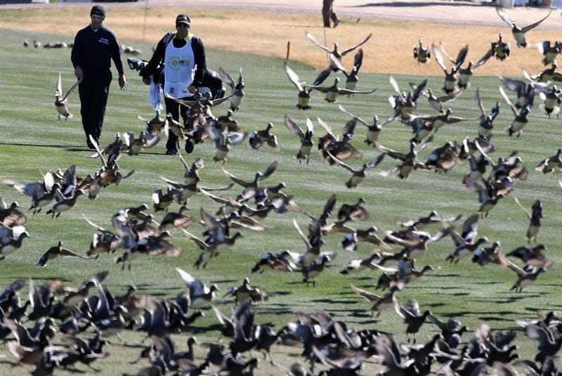 SCOTTSDALE, AZ - FEBRUARY 03:  Greg Chalmers of Australia walks with his caddie toward a flock of birds on the 11th hole fairway during the first round of the Waste Management Phoenix Open at TPC Scottsdale on February 3, 2011 in Scottsdale, Arizona.  (Photo by Christian Petersen/Getty Images)