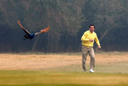 DELHI, INDIA - FEBRUARY 05:  Gonzalo Castano Fernandez of Spain chases a peacock during practice round of The EMAAR - MGF Indian Masters at Delhi golf Club on February 05, 2008 in Delhi, India.  (Photo by Stuart Franklin/Getty Images)