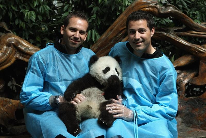 CHENGDU, CHINA - APRIL 19:  Sergio Garcia (L) of Spain pose for photos with a baby Panda during a visit to the Chengdu Research Base of Giant Panda Breeding on April 19, 2011 in Chengdu, China.  (Photo by Ian Walton/Getty Images)