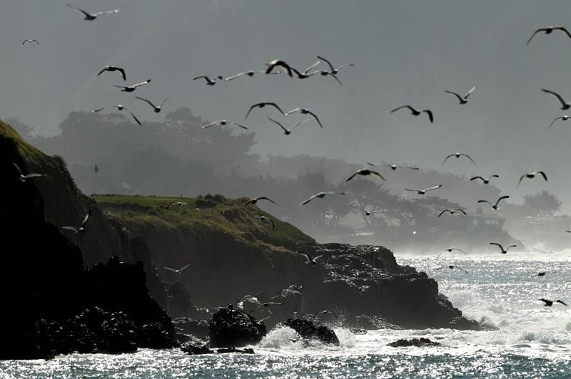 PEBBLE BEACH, CA - FEBRUARY 14:  A flock of birds play past the seventh green during the final round of the AT&T Pebble Beach National Pro-Am at Pebble Beach Golf Links on February 14, 2010 in Pebble Beach, California.  (Photo by Ezra Shaw/Getty Images)