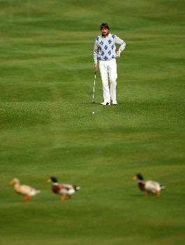 DOHA, QATAR - JANUARY 25:  Robert Jan Derksen of Holland waits for some ducks to cross the fairway on the 18th hole during the second round of the Commercialbank Qatar Masters at Doha Golf Club on January 25, 2008 in Doha, Qatar.  (Photo by Andrew Redington/Getty Images)
