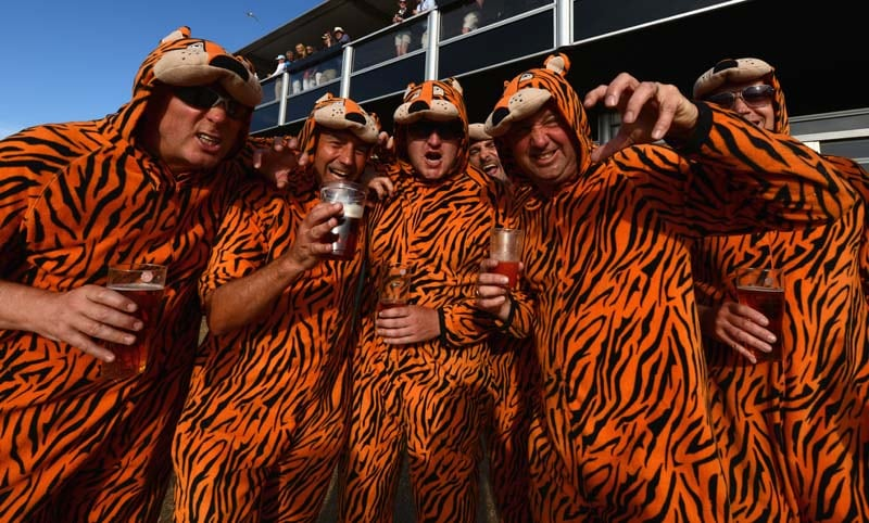 Tiger fans in tiger costumes