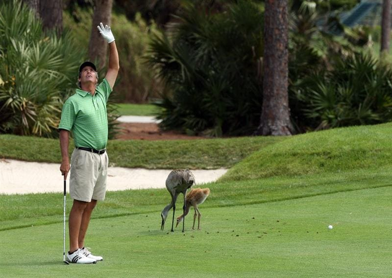 WEST PALM BEACH, FL - MARCH 23:  Ian Baker-Finch of Australia watches a ball as Cranes feed oblivious to the golfer at the 8th hole during the Els For Autism Pro-Am on the Champion Course at the PGA National Golf Club on March 23, 2009 in West Palm Beach, Florida  (Photo by David Cannon/Getty Images)